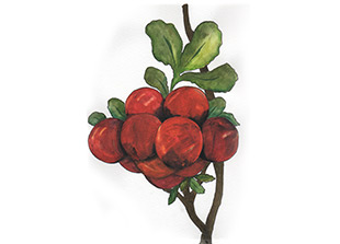 Piping Rock Cranberry Citrus Fragrance Oil